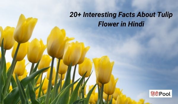 20+ Interesting Facts About Tulip Flower in Hindi